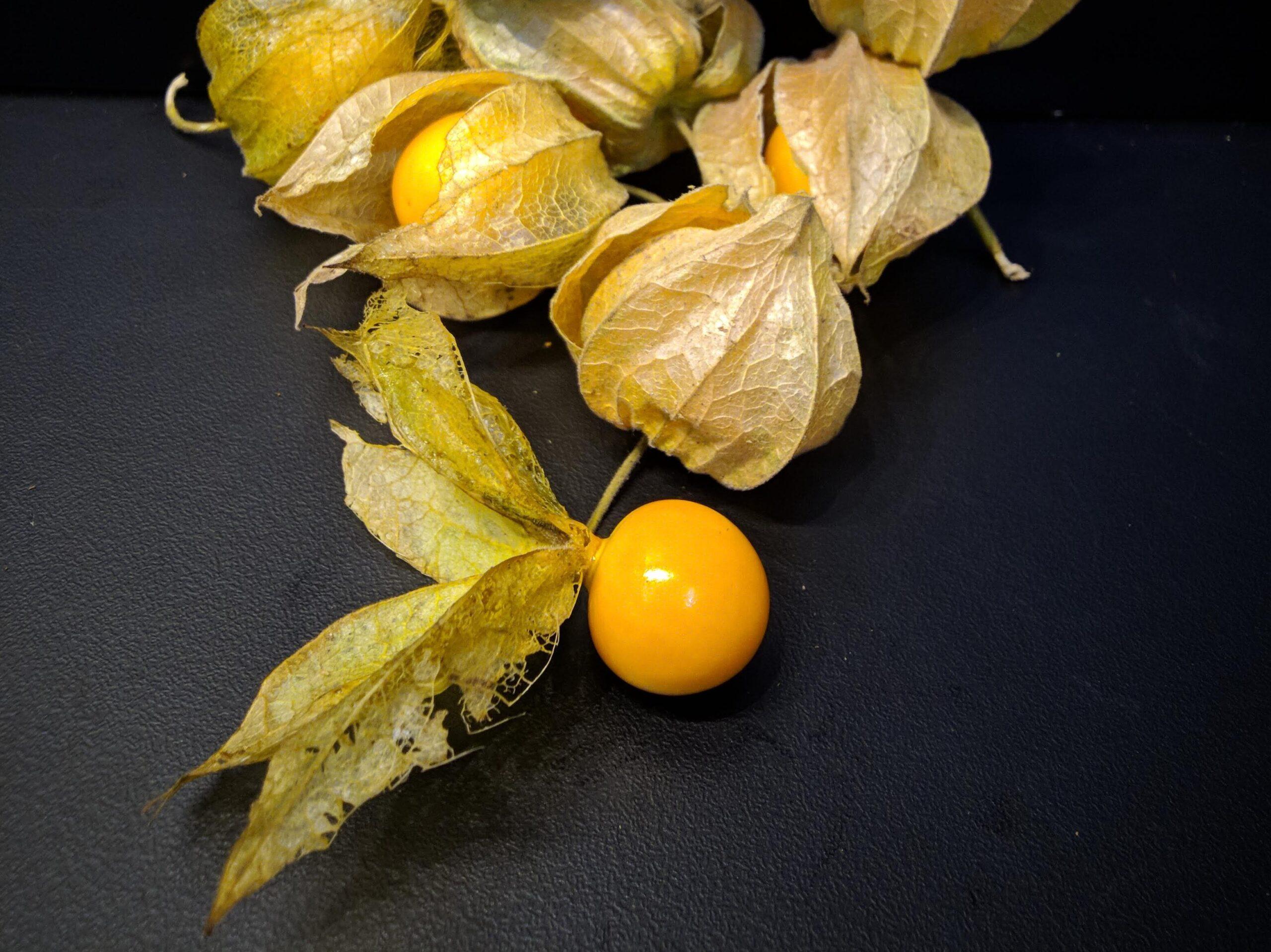 cecenet ciplukan goldenberry